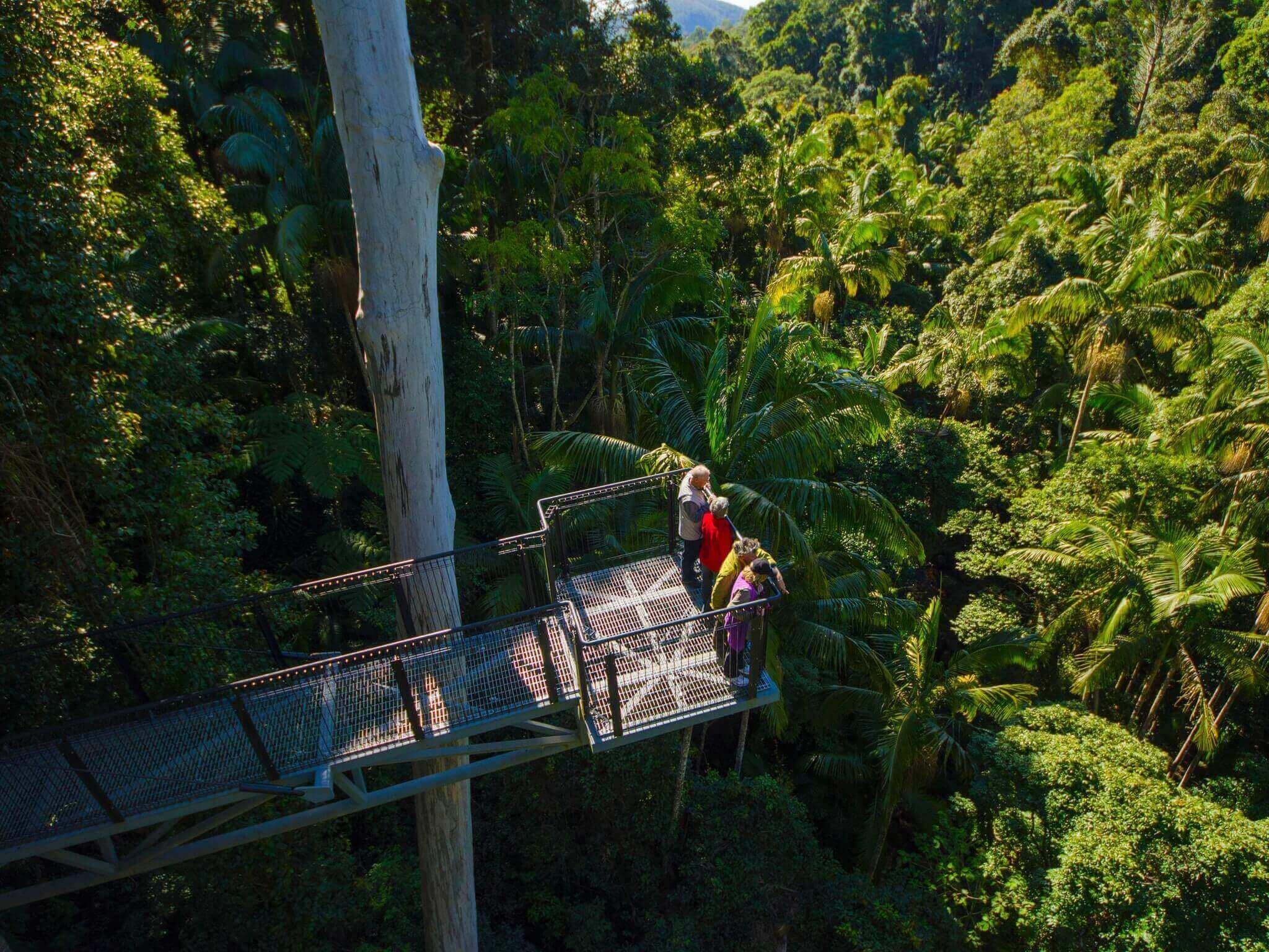 gold coast - Tamborine Rainforest Skywalk